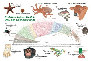 Evolution Cousin Poster